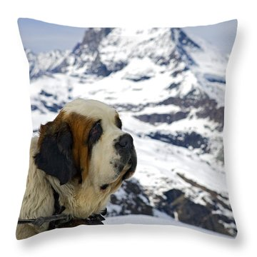 Throw Pillows Magnolia : St Bernard Dog Posing In Front Of The Matterhorn Photograph by Henk Meijer Photography